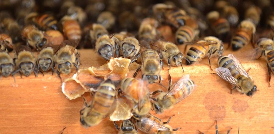 ShereeMartin-Honeybees-ForSJW-DSC_0119